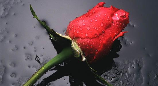 Muziek begrafenis uitvaart of crematie